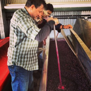 Rick plunging the new vintage